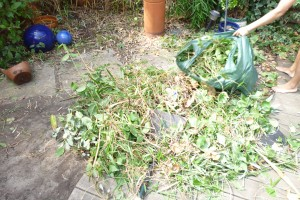 Clear up old weeds and organic material for recycling
