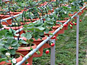 Benefits of organic hydroponic garden Advice and Tips Gardening