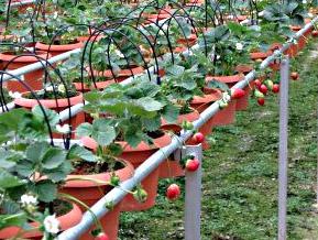 how to start hydroponics plants
