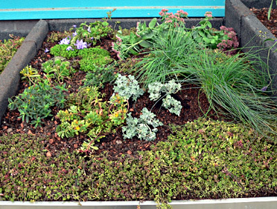 Natural plants on green roof